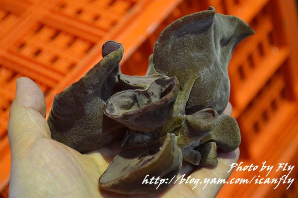 台中新社香菇、黑木耳,原來香菇很敏感~~ @我眼睛所看見的世界(Fly's Blog)