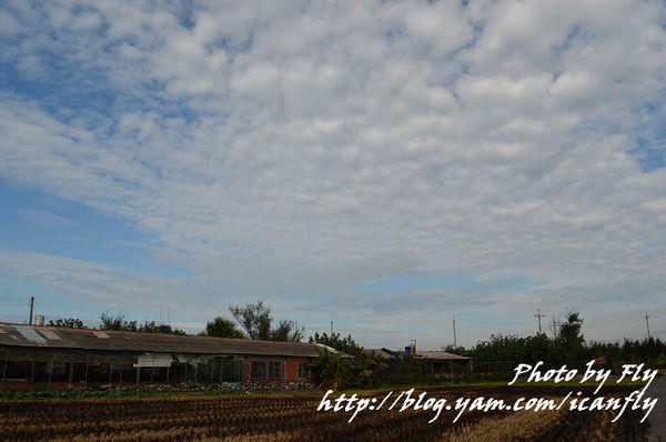 台中大安洋蔥、青蔥、休閒農場 @我眼睛所看見的世界(Fly's Blog)