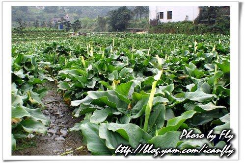【遊記】竹子湖、陽明山公園 @我眼睛所看見的世界(Fly's Blog)