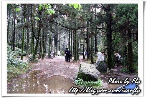 【遊記】婚紗照中的森林《台北陽明山》 @我眼睛所看見的世界(Fly's Blog)