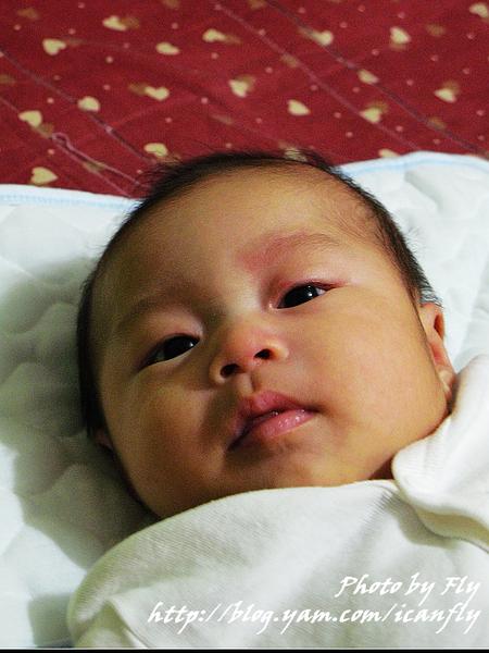 【妞】不要給嬰兒吃蜂蜜呀! @我眼睛所看見的世界(Fly's Blog)